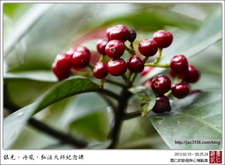 有没有觉得像是圆形的咖啡树果实?所以我都叫它伪咖啡豆.